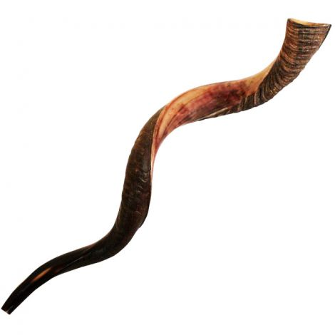 Large Kosher Yemenite Shofar - Semi-Polished - Made in Israel