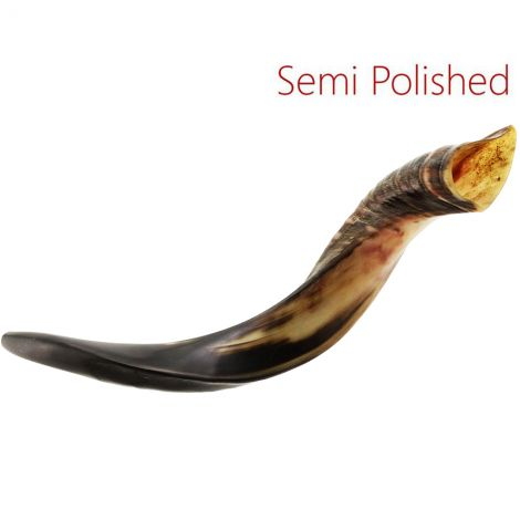 "Medium Yemenite Shofar - Semi-Polished - Made in Israel - 22"" - 26"""